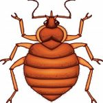 How to Check for Bed Bugs on the Road