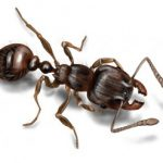 Here's How You're Attracting Ants Into Your Home