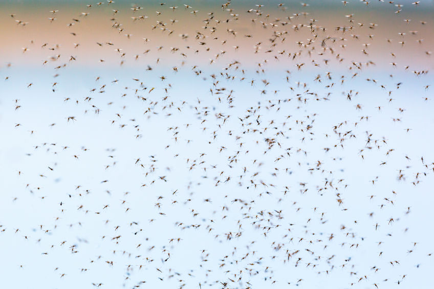 How to Stop Mosquito Swarms at Night - Premier Pest