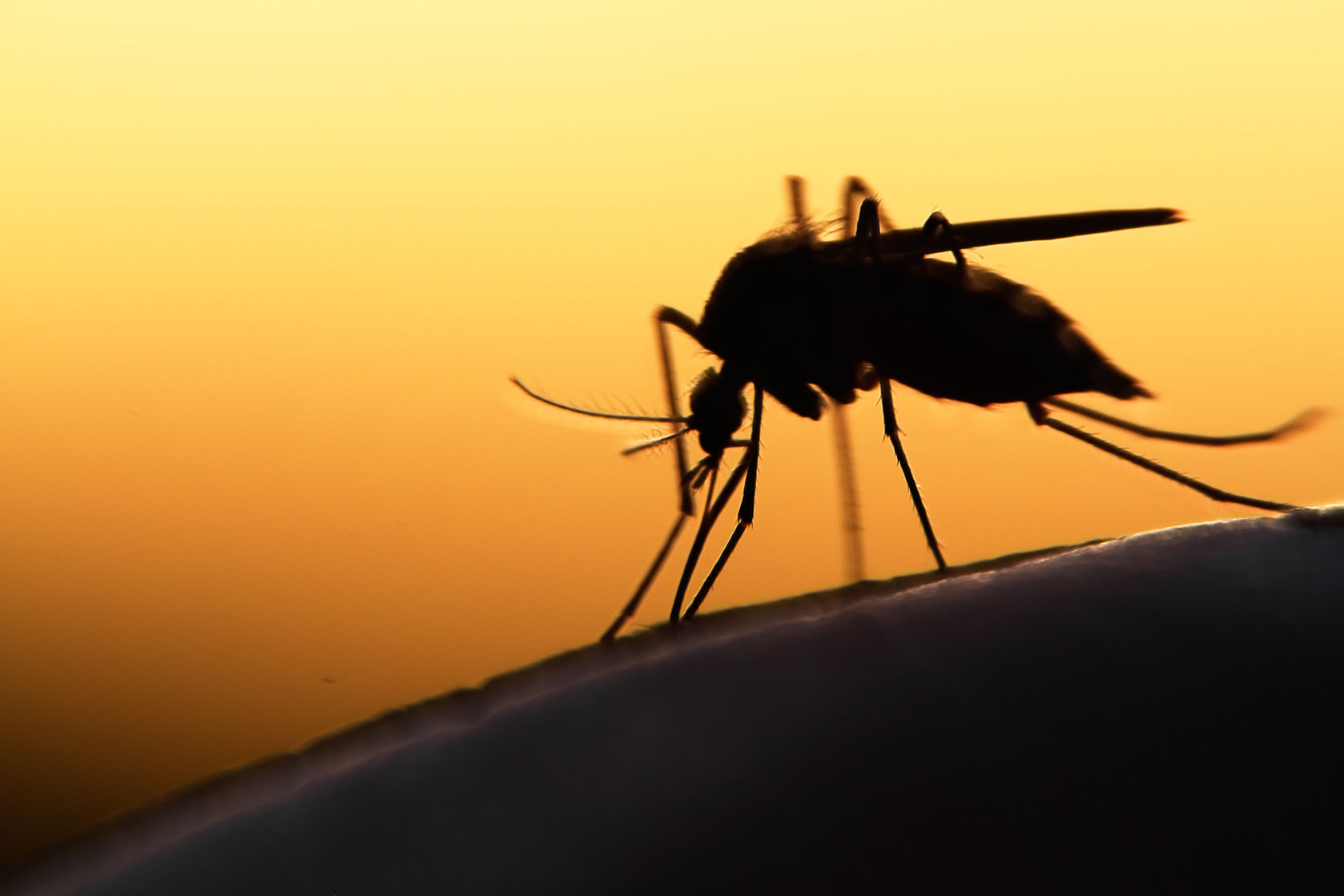 5 Natural Ways To Get Rid Of Mosquitoes