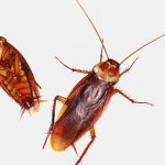 5 Simple Ways to Help Get Rid of Roaches