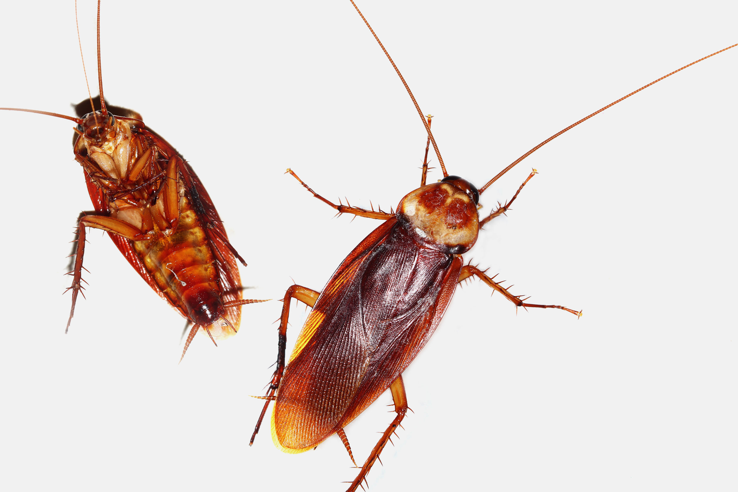5 Simple Ways to Help Get Rid of Roaches - Premier Pest