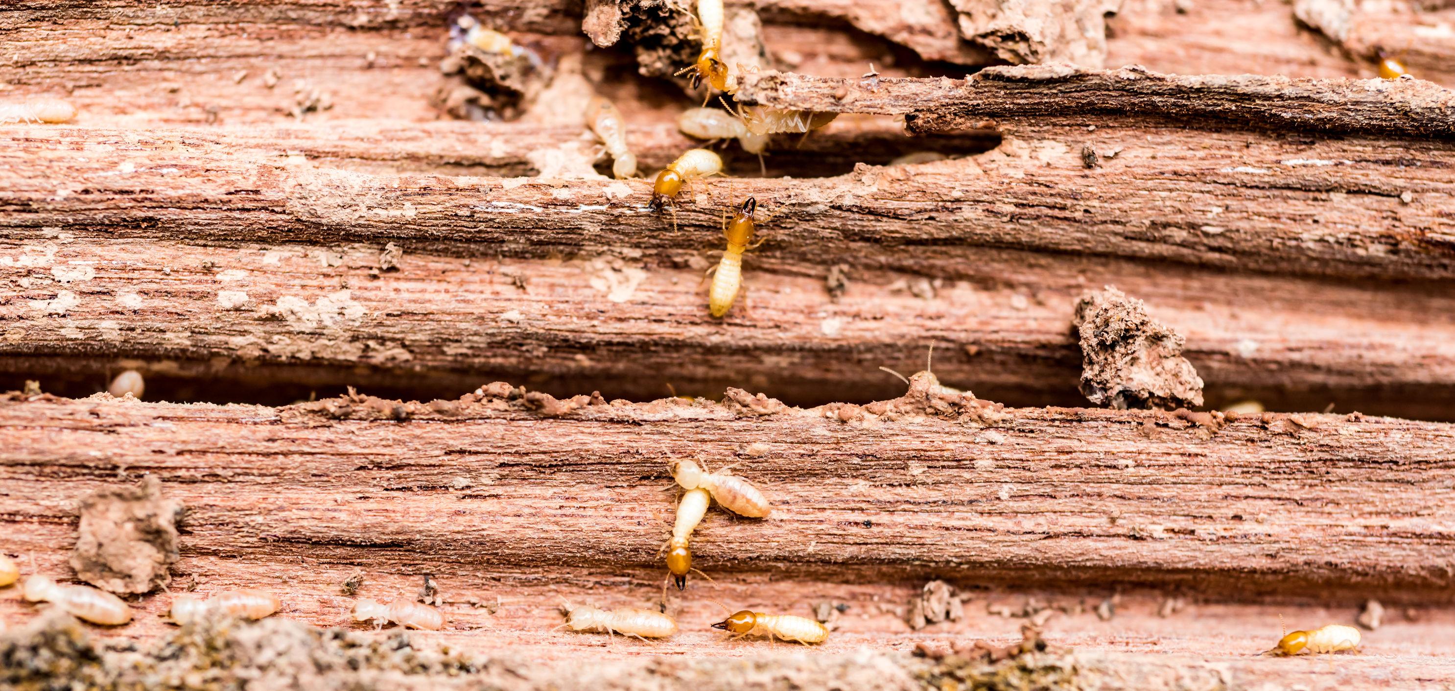 The Sentricon Termite System